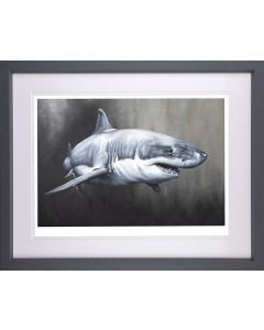 Carcharodon Charcharias